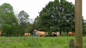 Carne de buey Asturiana