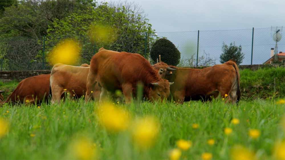 ganadería Cabrero